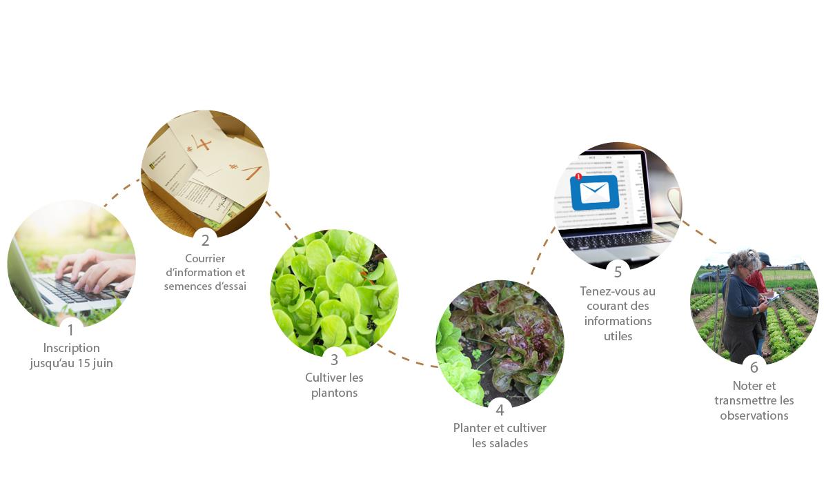 Quelle Salade Planter Maintenant unis-vers potager